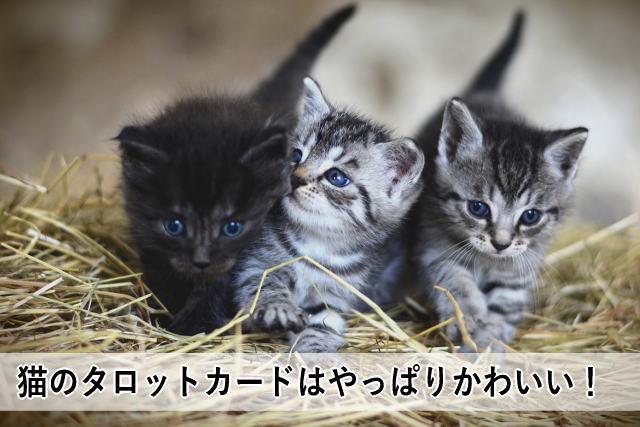 猫のタロットカードはやっぱりかわいい!